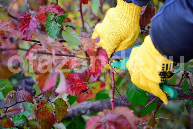 Обрезка плодовых деревьев: как и когда проводить