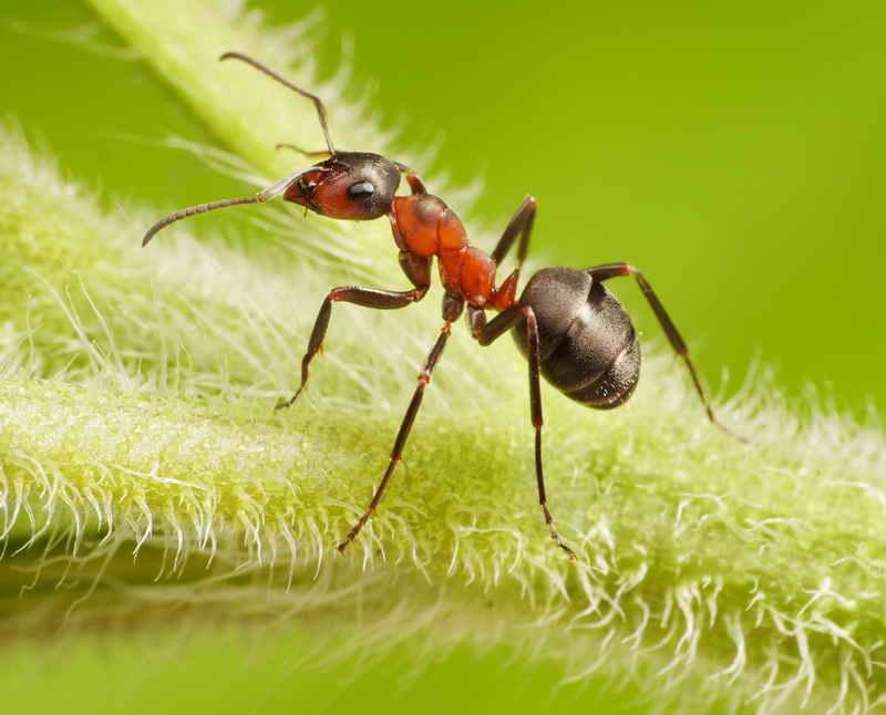 Способы избавления от муравьев