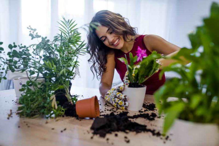 Выращивание комнатных растений в домашних условиях