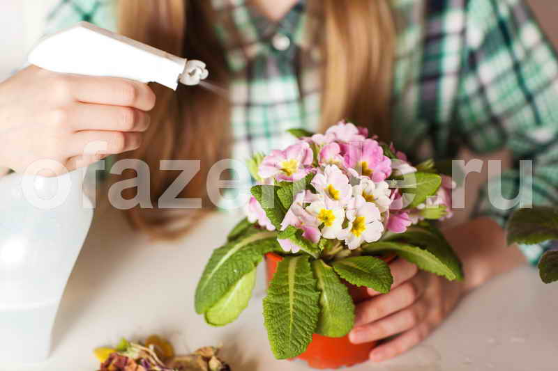 Цветник в квартире