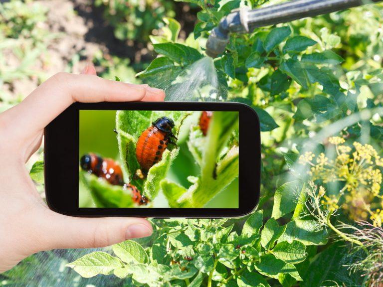 5 злостных вредителей огорода и методы борьбы с ними
