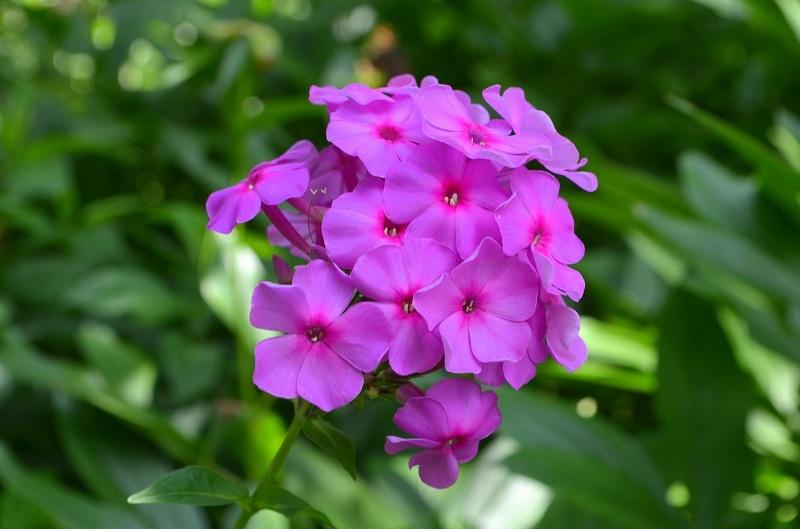 Цветы, растущие в тени и полутени