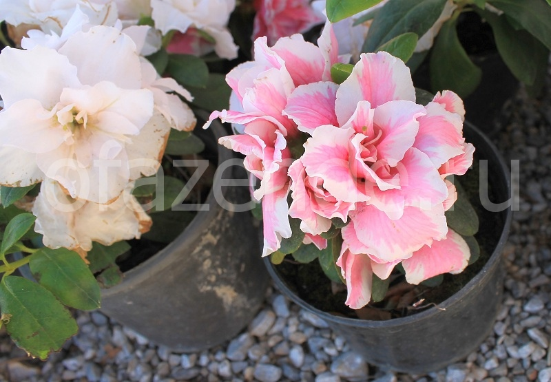 Посев цветов под зиму: какие сорта подходят