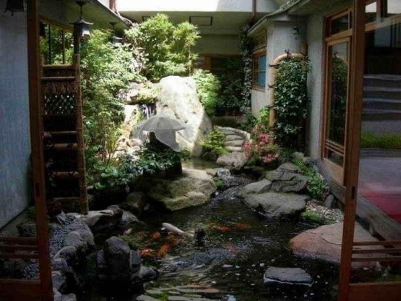 Водяной садик во внутреннем дворике: советы садоводам