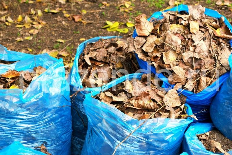 Используем опавшие листья с пользой для чеснока