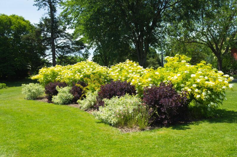 Несколько секретов размещения растений в саду