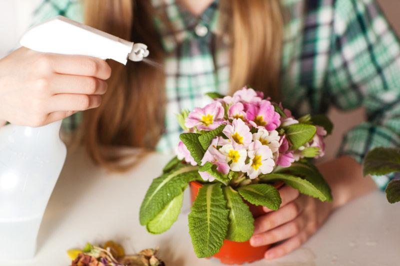 Янтарная кислота для растений: правила применения