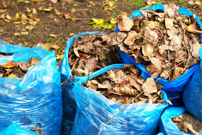 Несколько идей, что делать осенью с опавшими листьями