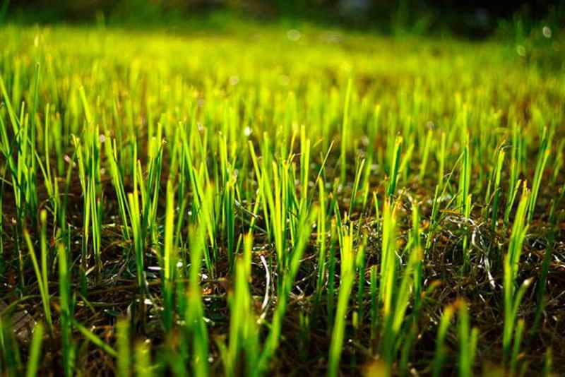 Посев газонной травы осенью: секреты идеальной лужайки