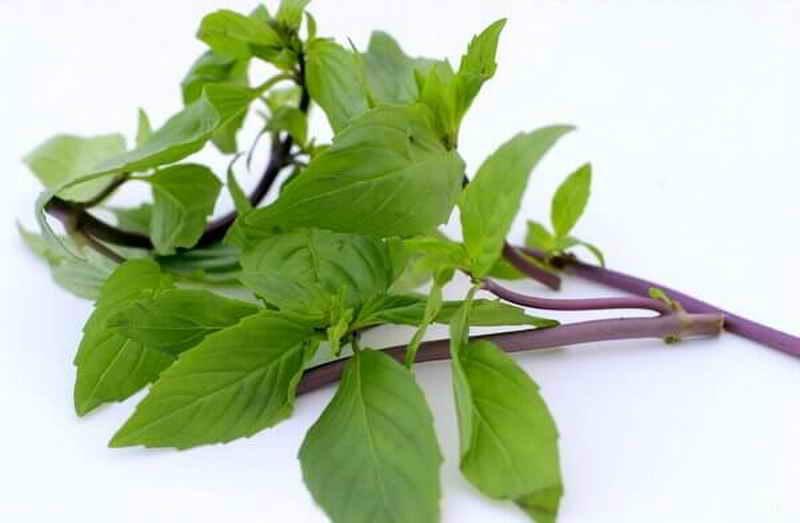 11 разновидностей базилика: свойства, применение в кулинарии