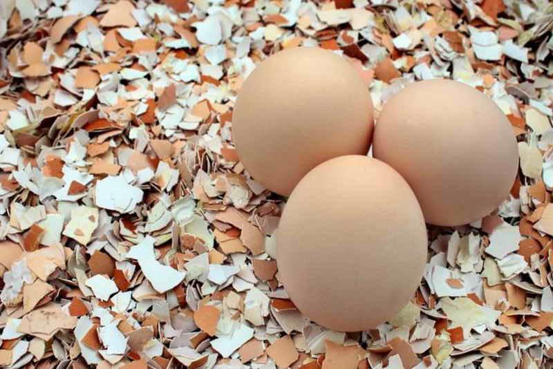 Яичная скорлупа на вес золота! Пять полезных способов применения