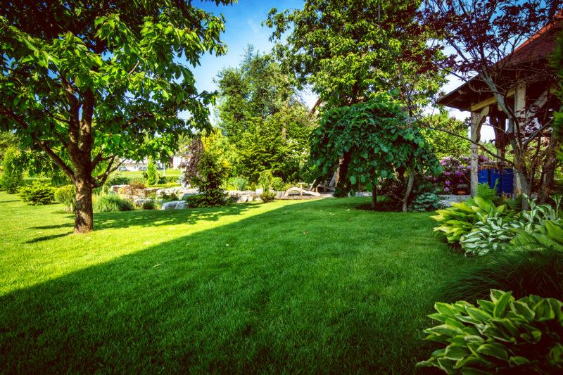 Совместимость деревьев и кустарников на участке