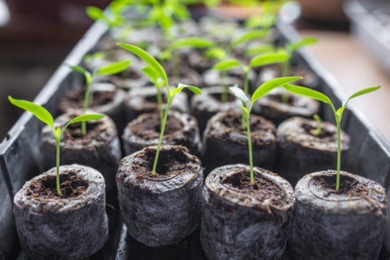 Удобрения для рассады – какие выбрать и как подкармливать растения