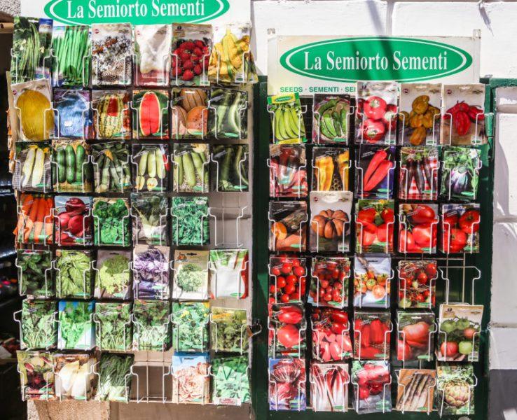 Ошибки которые мы допускаем при покупке семян на следующий год