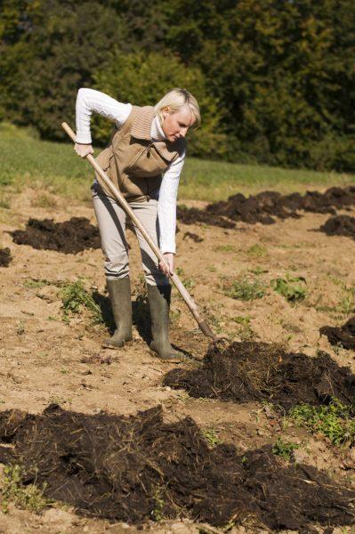 Несколько обязательных дел, которые необходимо сделать в ноябре в саду