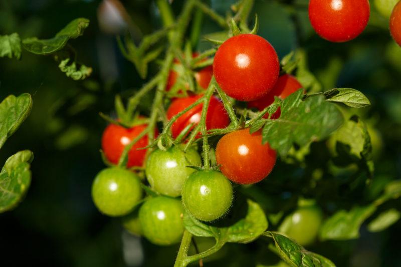 Пересадка овощей на зиму в домашние условия: горшки