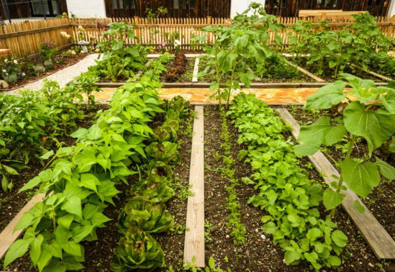 Выращивание овощей по Джону Джевонсу – небывалый урожай при минимальном уходе