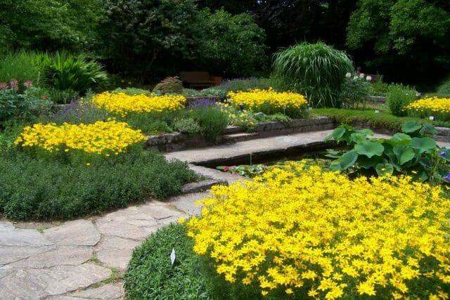 Ритмические приемы для цветников и миксбордеров