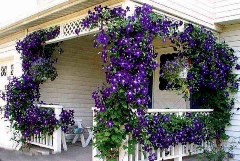 Цветущая пирамида из растений на вашем балконе: советы садоводам