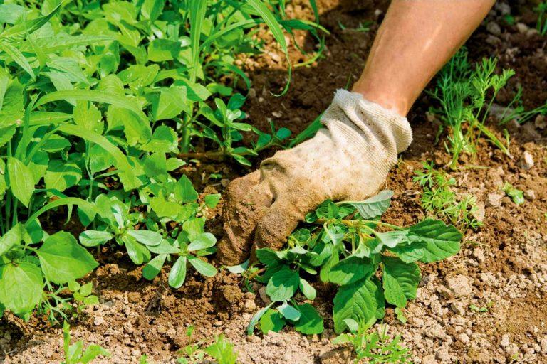 8 проверенных способов, как избавиться от сорняков, чтобы они больше не появлялись