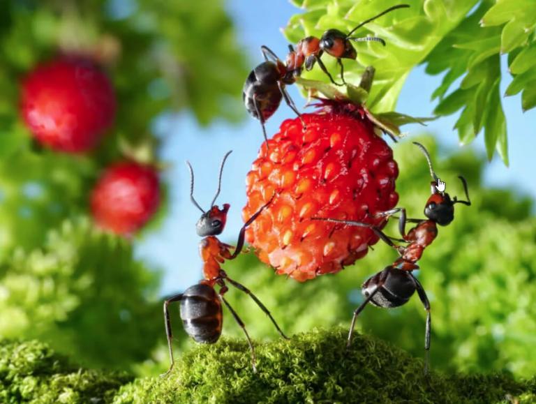4 народных способа избавления от муравьев на огороде