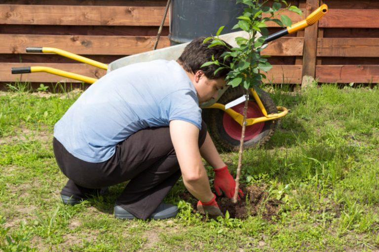 Как правильно сажать плодовые деревья осенью