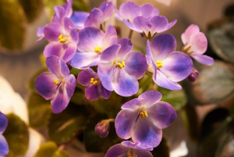 Какой цветок подходит вам по знаку Зодиака