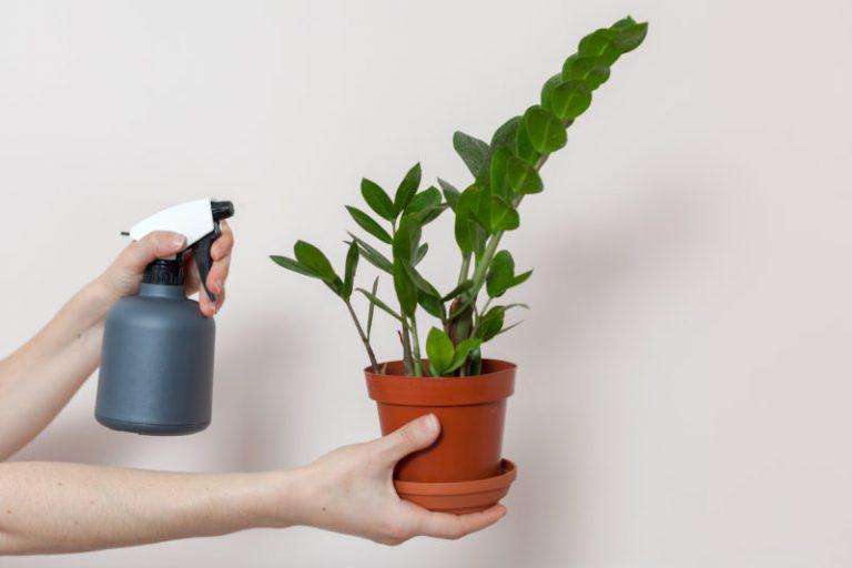 Особенности полива замиокулькаса: как сохранить яркий и здоровый внешний вид