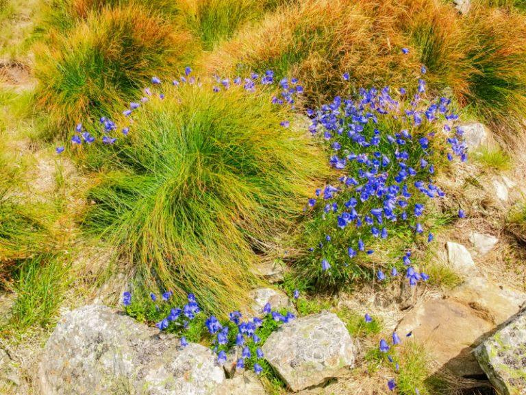 Какие цветы украсят альпинарий?