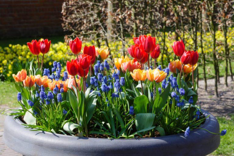 5 простых клумб, которые можно посадить на даче