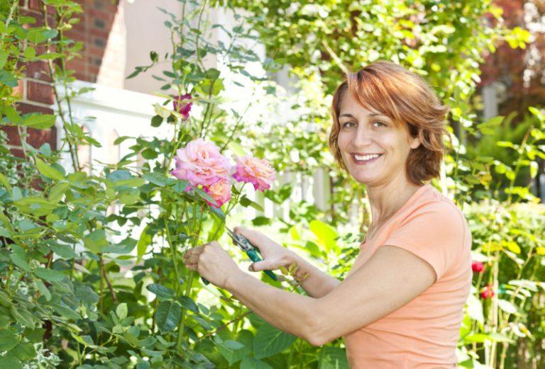 5 основных подкормок для розы
