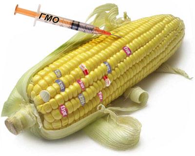 Что такое гибрид F1 и ГМО. Какие семена выбрать для посадки на рассаду