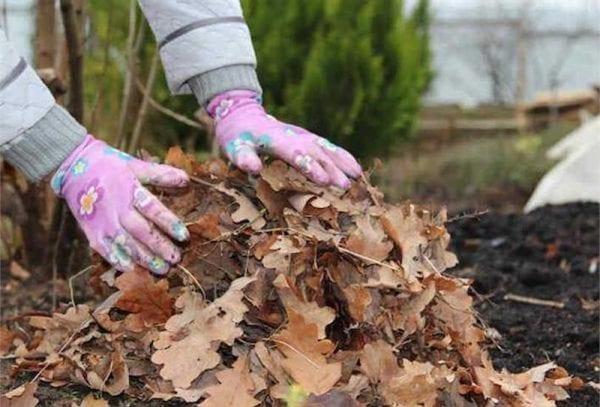 5 причин, почему не стоит убирать опавшие листья в саду