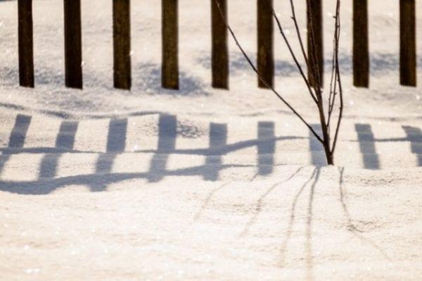 Что должен сделать садовод в конце зимы, чтобы подготовиться к весенним работам
