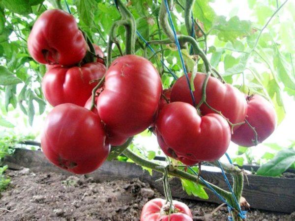 Томат «Розовый мед»: характеристика и описание сорта