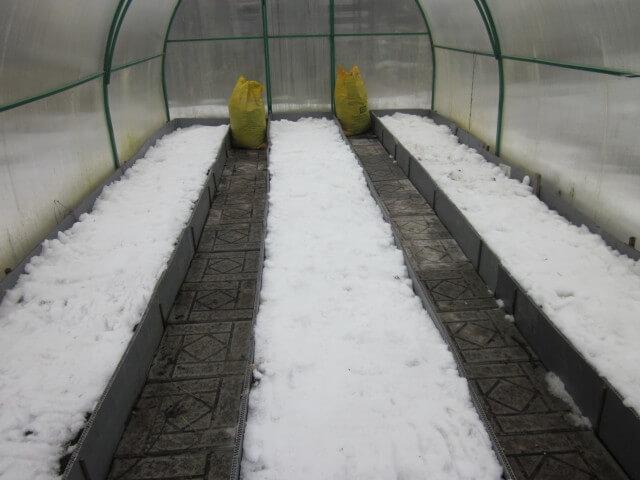 Как подготовить теплицу к весеннему посеву