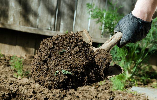 Вскапывание огорода лопатой