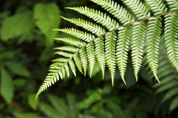 6 растений и цветов, которые приносят счастье и удачу