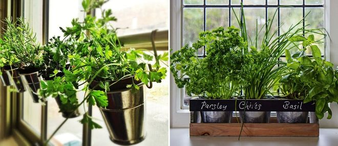Травы и салат в горшке на кухне