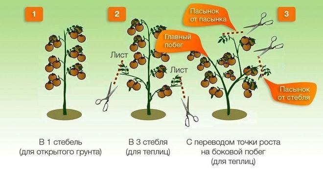 Схемы формирования куста томатов