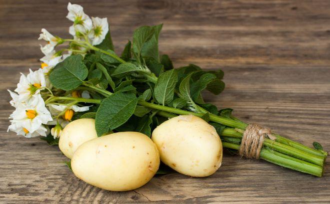 Картошка из семян