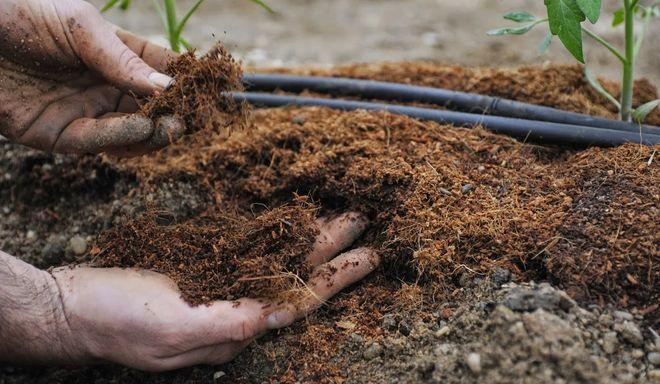 Добавление торфяной смеси в почву