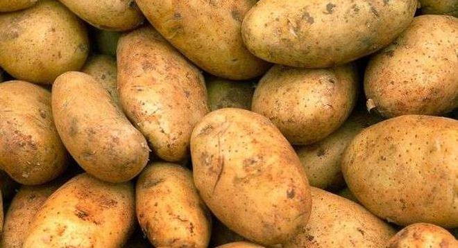"Картошка ""Винета"""