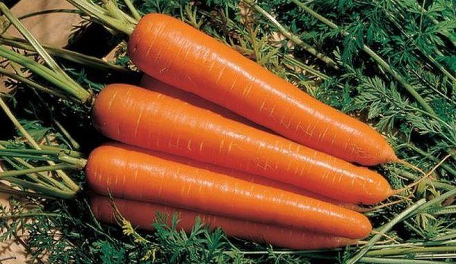"Морковь ""Амстердамская"""