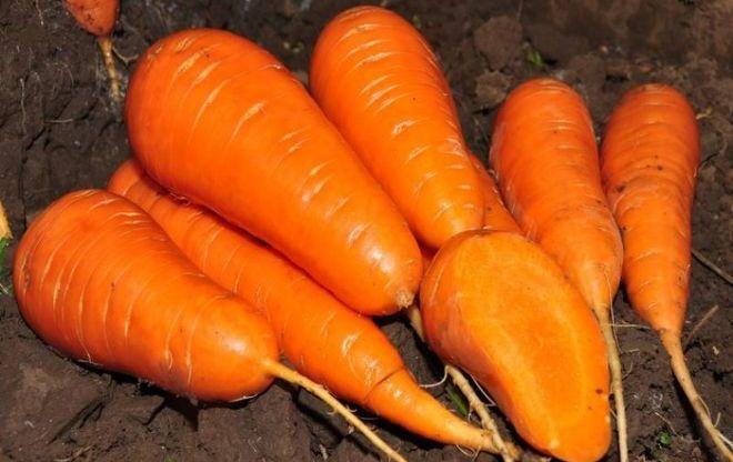 "Морковь ""Краса Девица"""