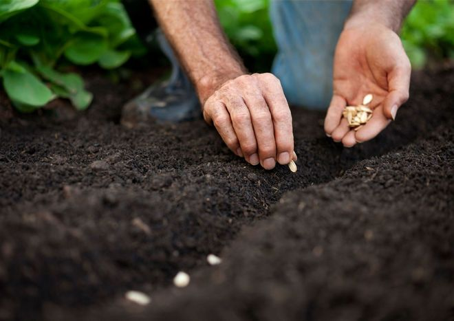 Посев семян в землю