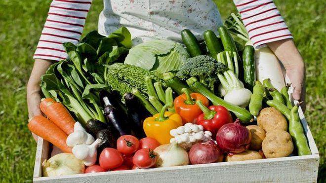 Сбор урожая овощей