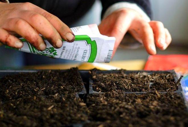 Посев семян в кассету