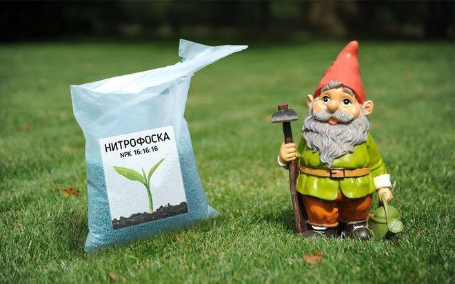 Нитрофоска для удобрения растений