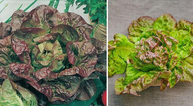 Листовой салат 4 сезона